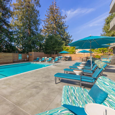 Resort-style swimming pool at Mia in Palo Alto, California