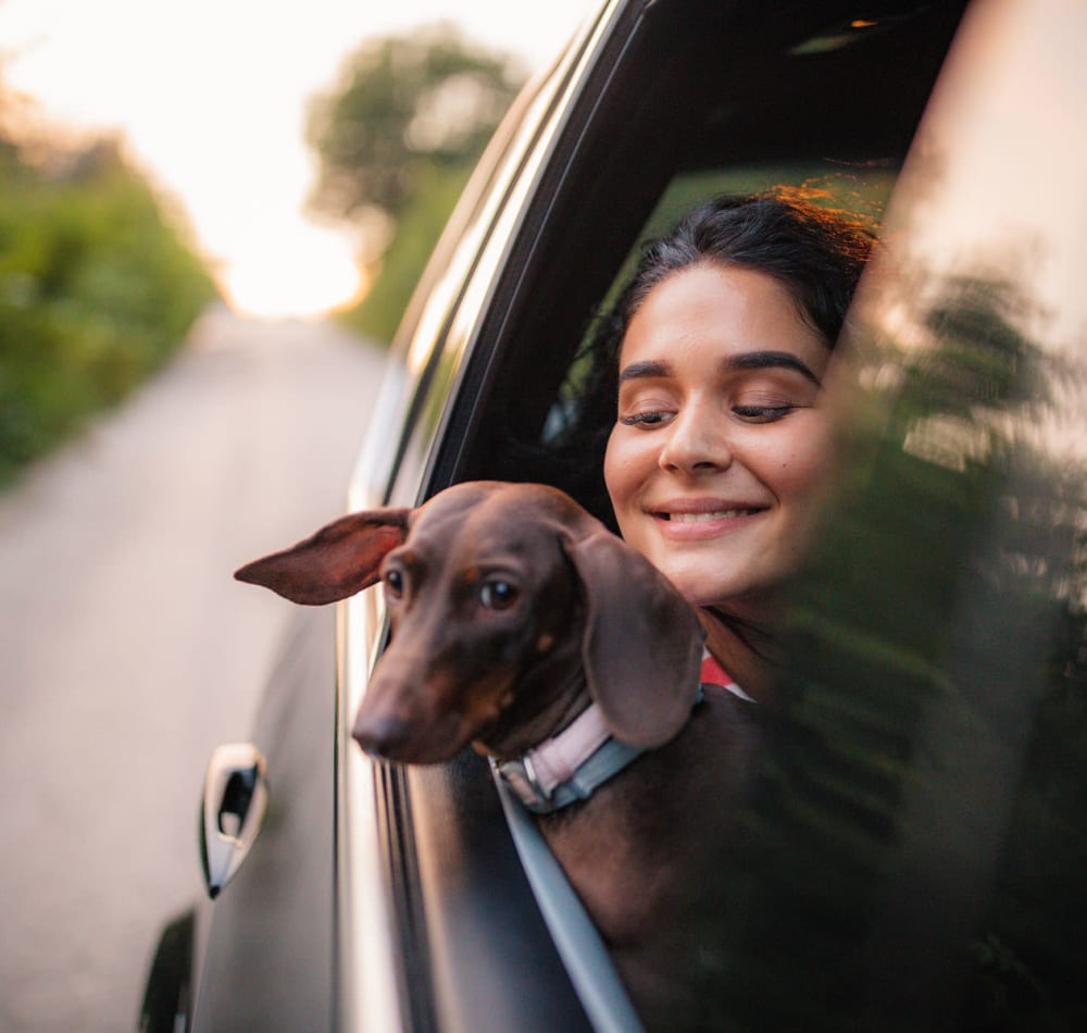 Happy dog going for a drive with her owners near Village Pointe in Northridge, California