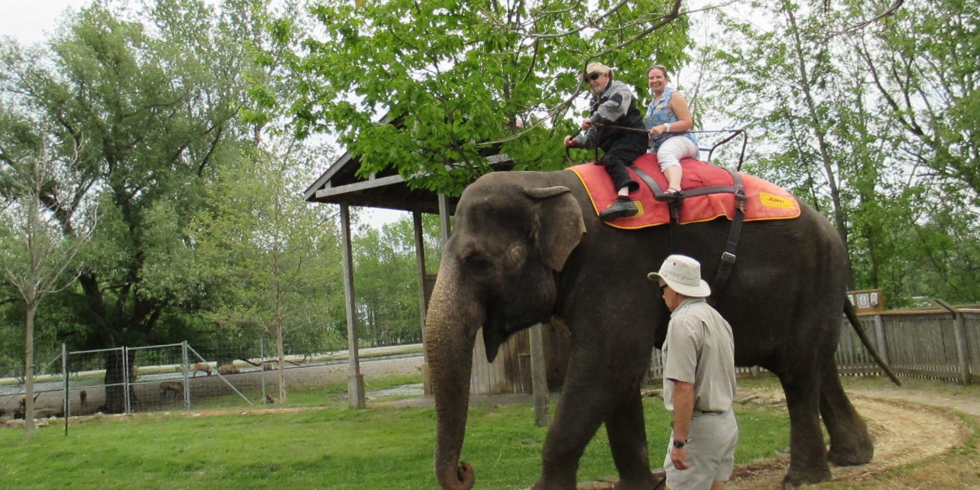 Residents riding a elefant at Cedarview Gracious Retirement Living in Woodstock, Ontario