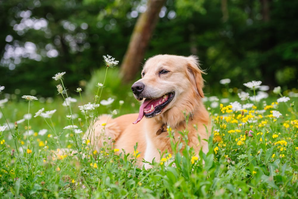 Happy dog in flowers near 301 Riverwalk Place in Buffalo Grove, Illinois