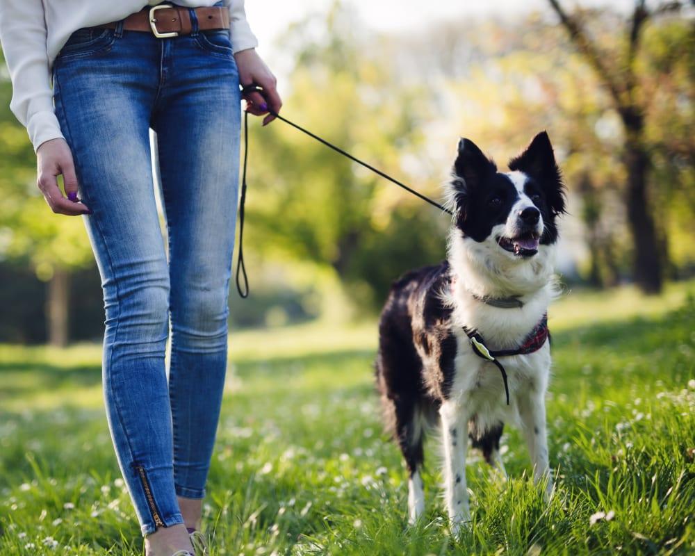 Women walking her dog at the park near Hawthorne Townhomes in South Salt Lake, Utah