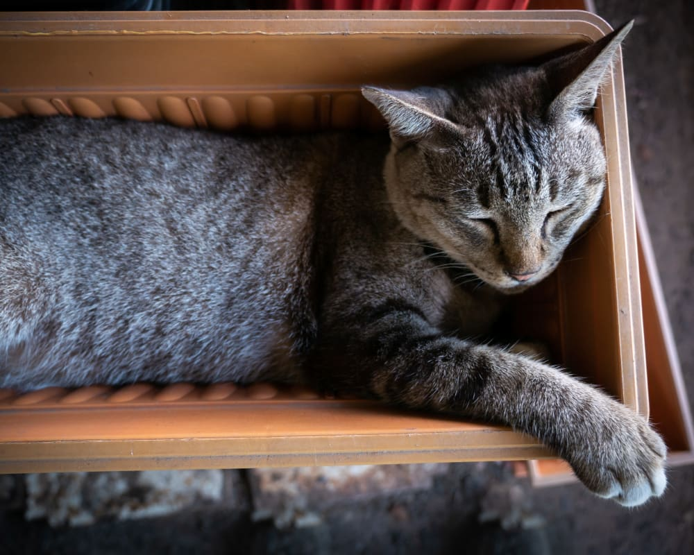 Cat laying in a basket at Prospect Ridge Apartments in Hackensack, New Jersey