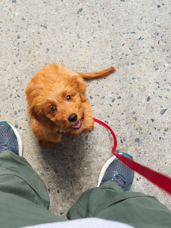 Resident taking their dog for a walk in Weymouth, Massachusetts near The Aeronaut