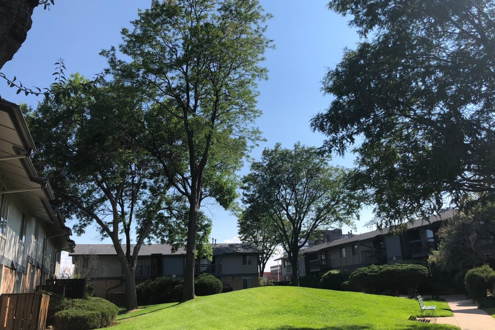 Courtyard at Forest Cove Apartments in Denver, Colorado