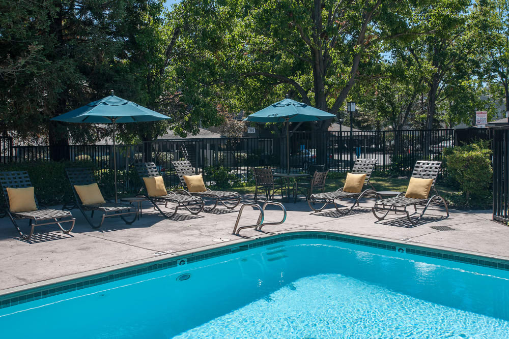 Sundeck with a umbrellas for shade at Plum Tree Apartment Homes in Martinez, California