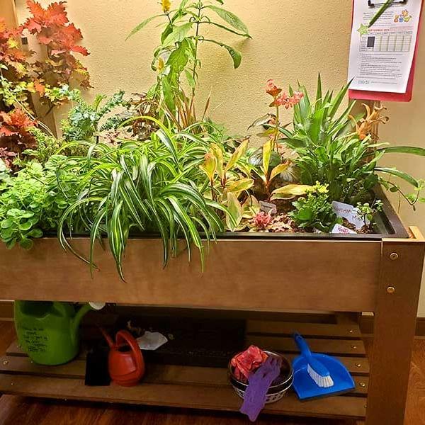 Indoor planter full of vibrant plant life at Quail Park Memory Care Residences of Visalia in Visalia, California