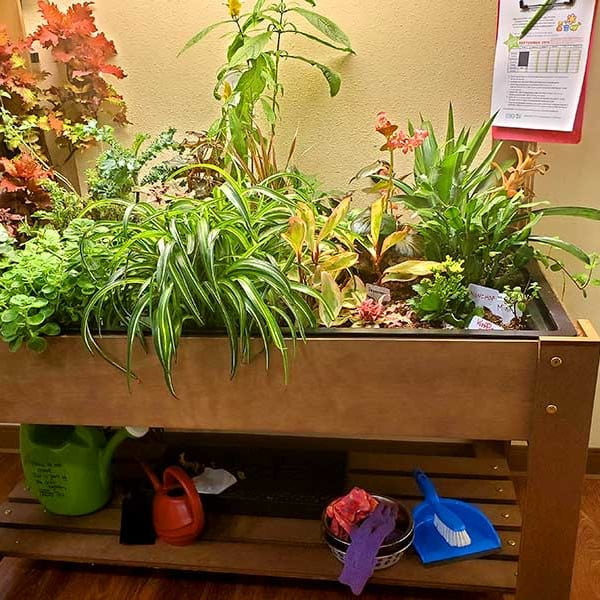 Indoor planter full of vibrant plant life at Quail Park on Cypress in Visalia, California