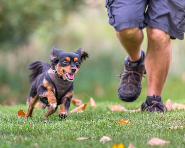 Resident and his pup running on the grass outside their new home at Canyon View in Las Vegas, Nevada