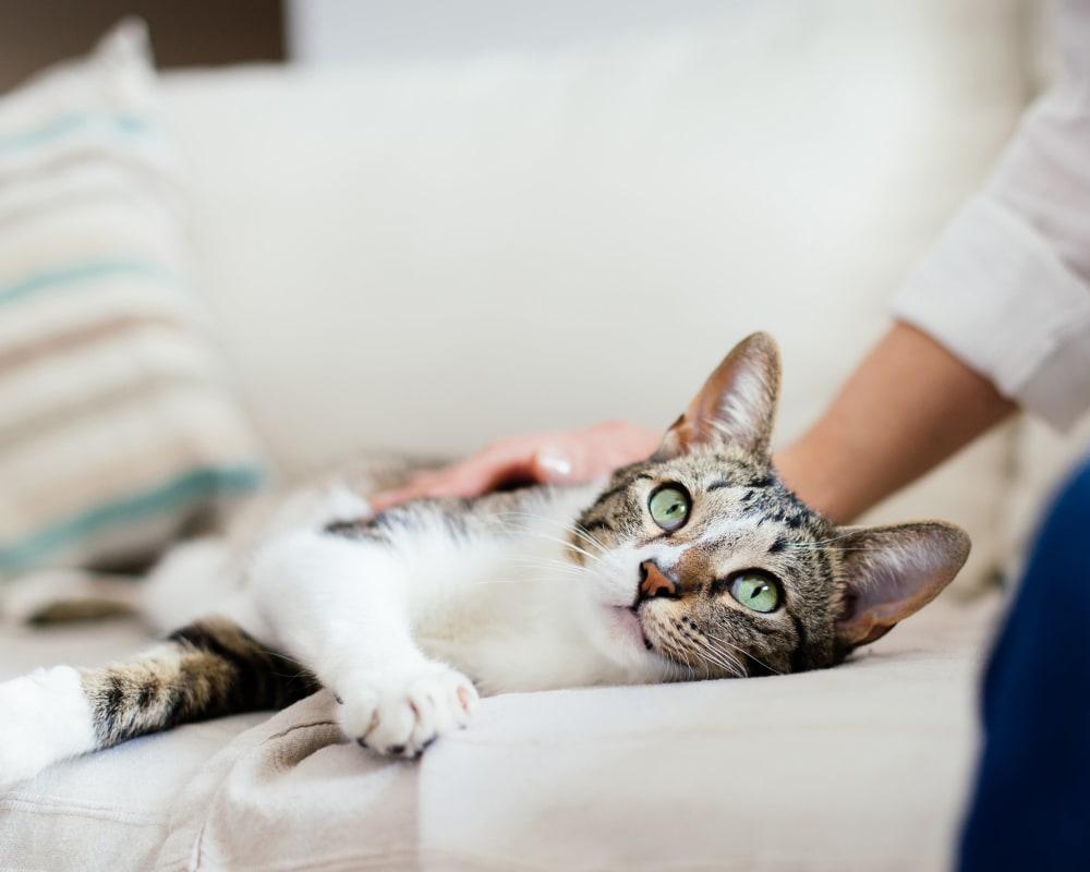 Happy cat in her new home at Hanover Glen in Bethlehem, Pennsylvania
