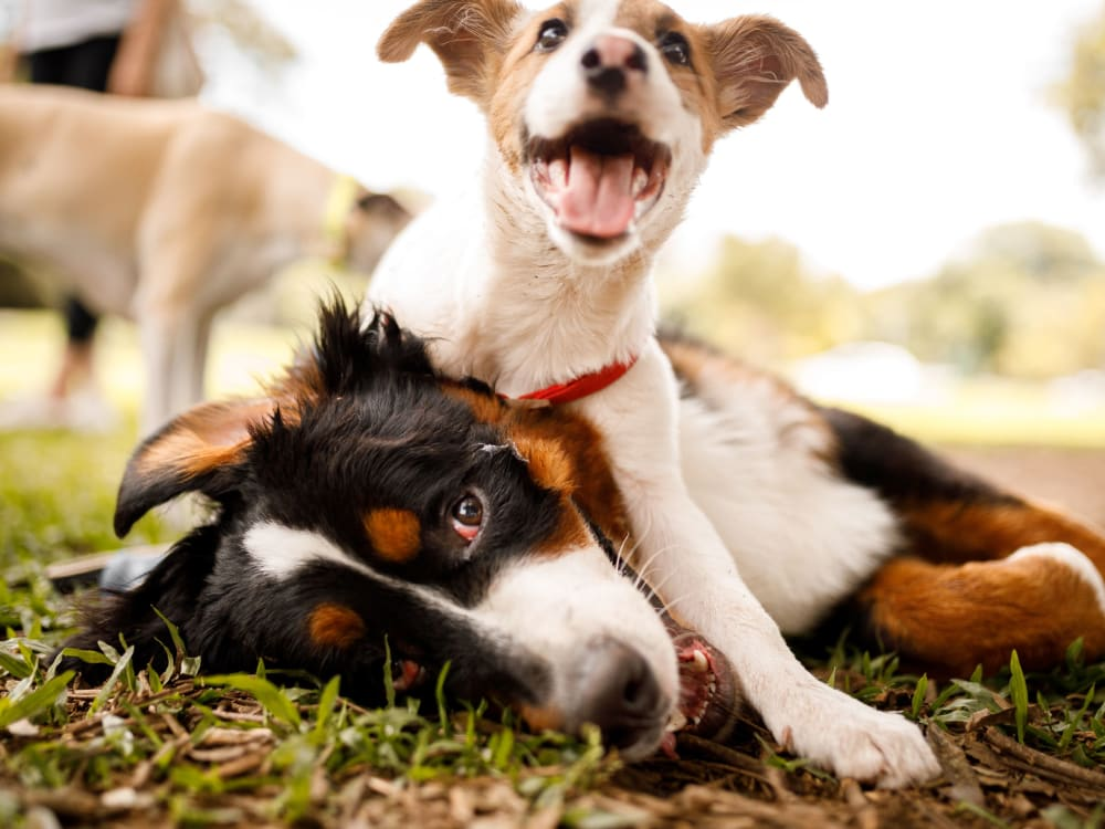 Happy dogs at Barringer Square in Webster, Texas