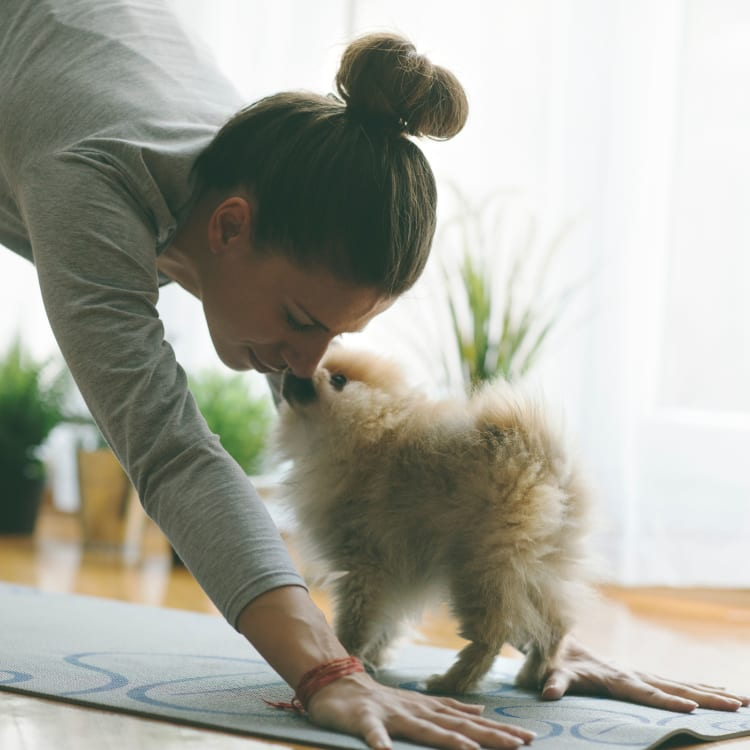 Dog helping their owner do yoga at The Colonnade Luxury Townhome Rentals in Hillsboro, Oregon