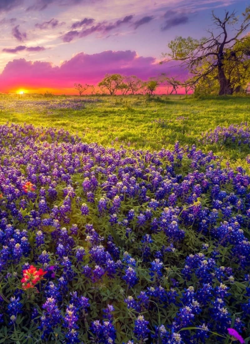 Beautiful local field near Marquis at Silver Oaks in Grapevine, Texas