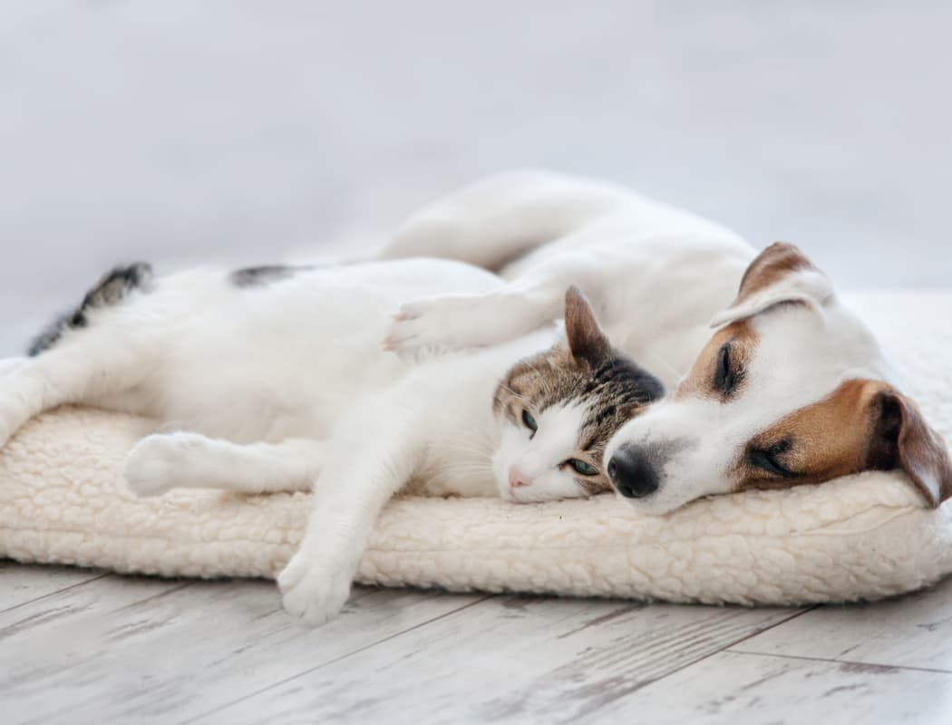 Dog and cat napping together in their new home at Ashton Village in Portsmouth