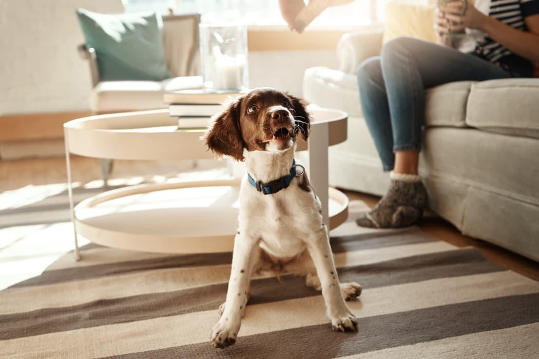 Happy dog at Tuscana Bay Apartments in Corpus Christi, Texas