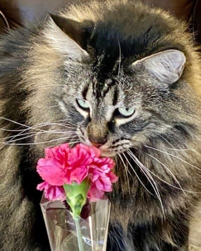Cat with a Flower at Broadwell Senior Living