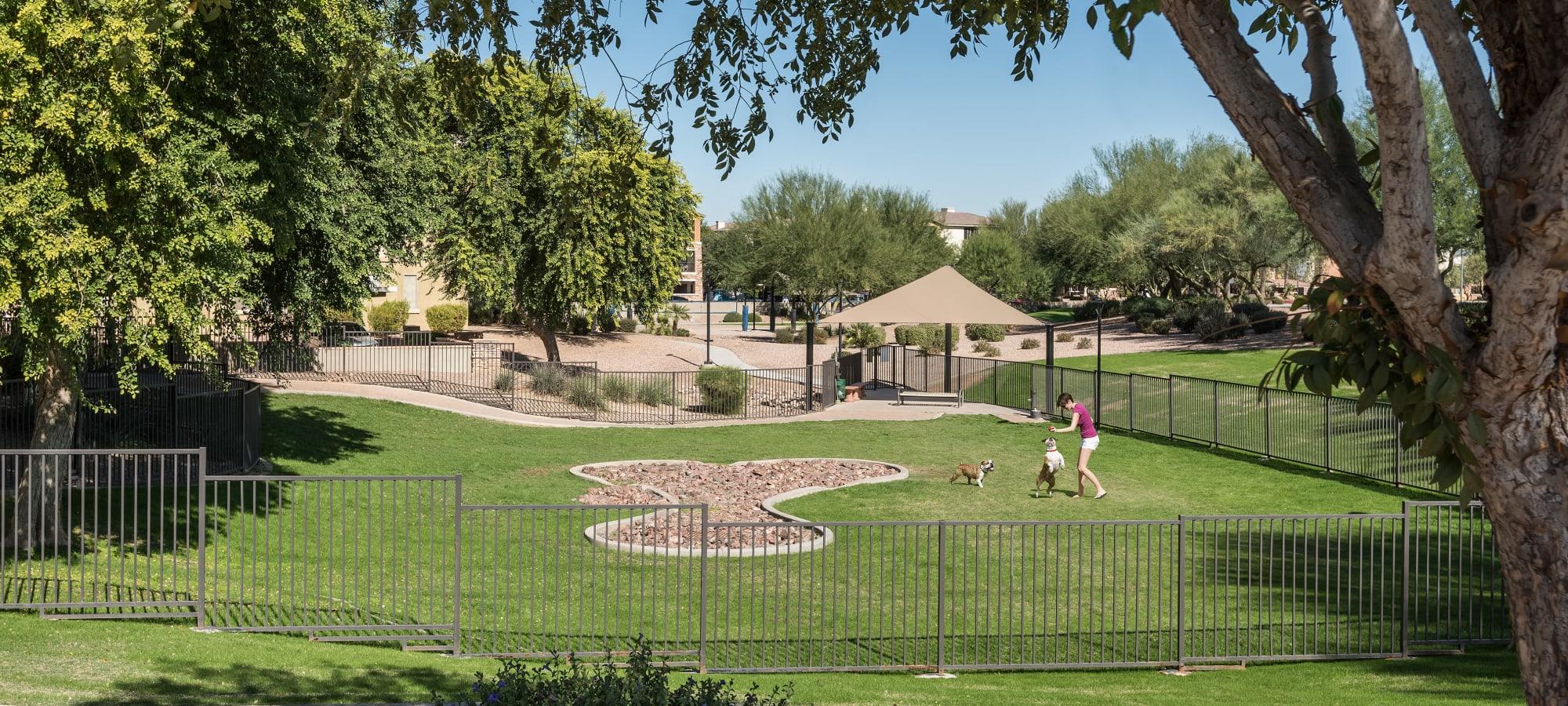 Lush dog park at Azul at Spectrum in Gilbert, Arizona