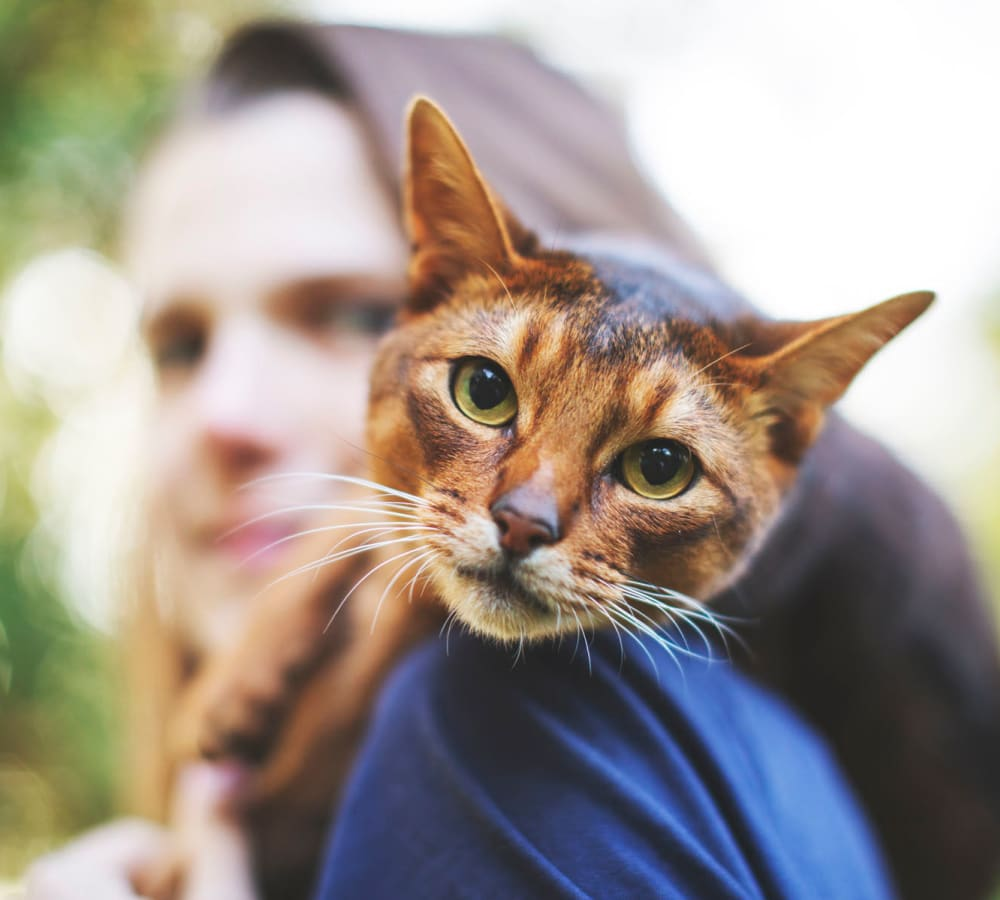 Resident venturing outside with her cat on her shoulder at Pleasanton Place Apartment Homes in Pleasanton, California