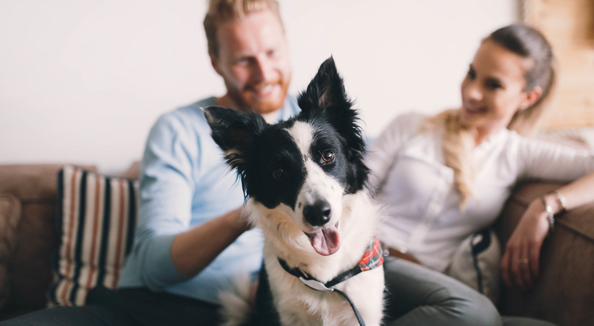 Pet-friendly apartments at The Gates of Deer Grove in Palatine, Illinois