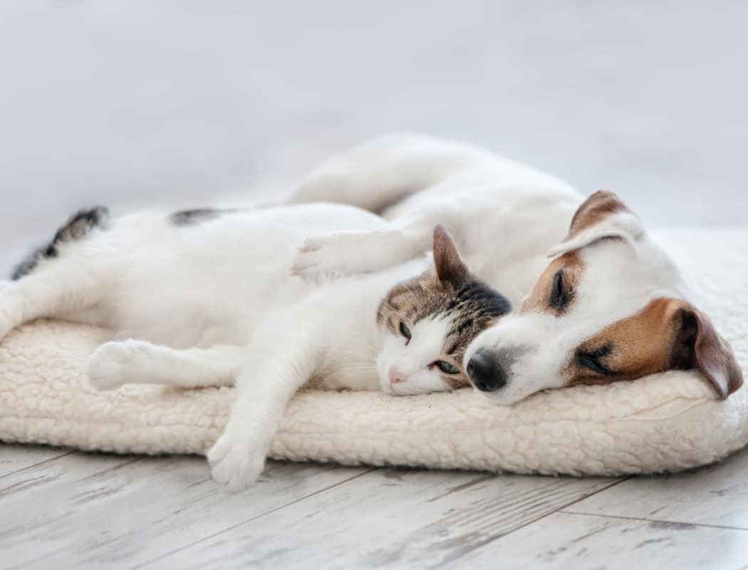 Dog and cat napping together in their new home at Stonebridge Apartments in Chesapeake, VA