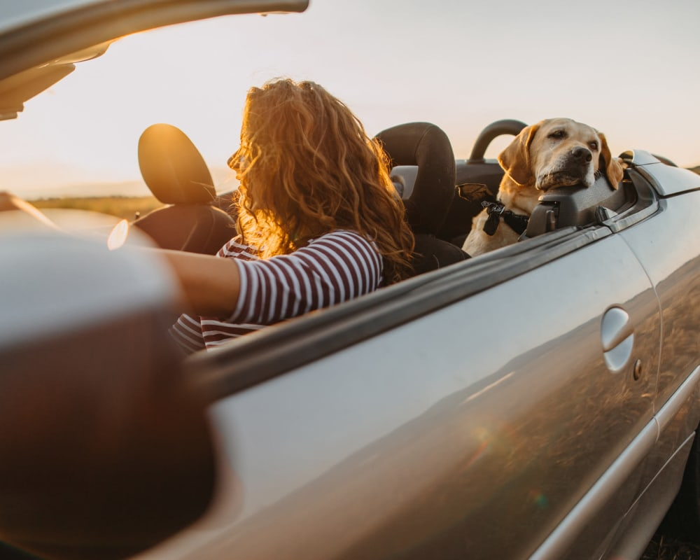 Resident and her dog taking a sunset drive with the top down near The Ranch at Shadow Lake in Houston, Texas