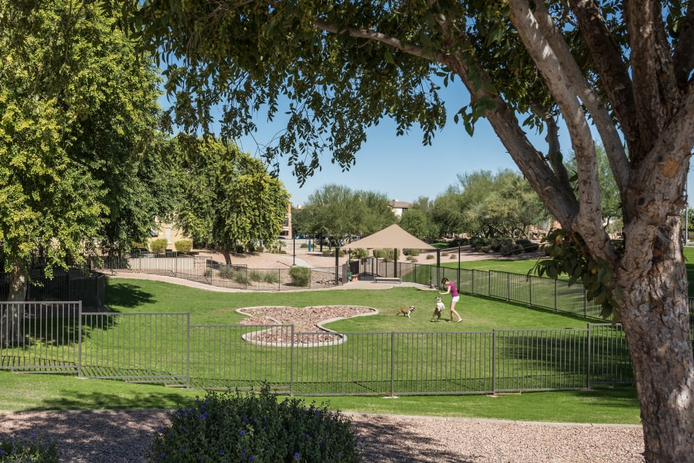 Resident and her dogs playing at the dog park at Azul at Spectrum in Gilbert, Arizona