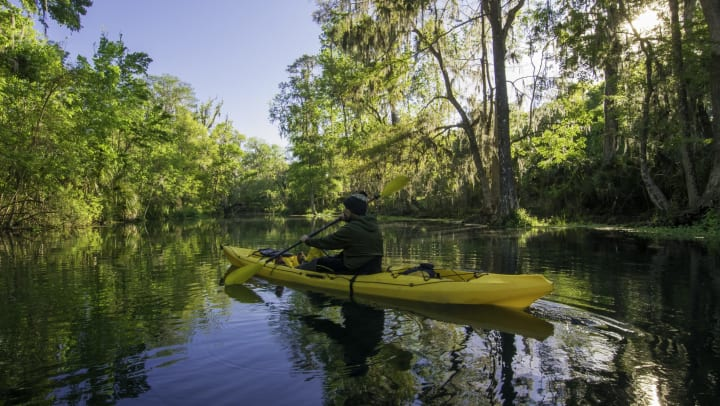 Person paddling on a waterway surrounded by swamp-like vegetation.