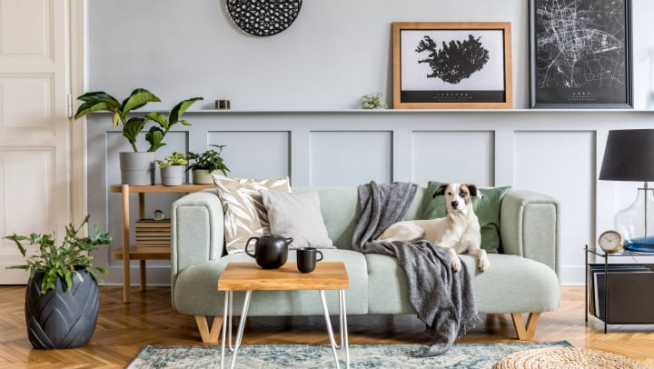 Stylish living room with modern mint sofa, wooden console, furniture, plant, elegant accessories, and dog laying on the couch.