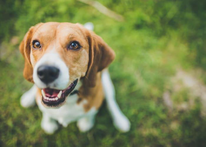 Cute dog at The Crossing at Henderson Mill in Atlanta, Georgia