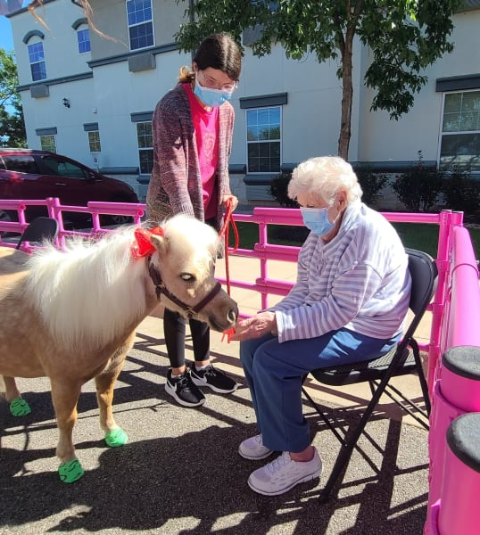 A Georgetown resident sits down and pets one of the mini horses.