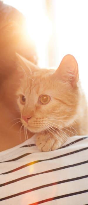 Resident holding her kitten at The Artisan Apartment Homes in Sacramento, California