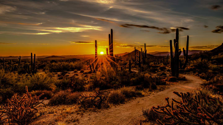 sunset over desert landscape of cactus and sagebrush