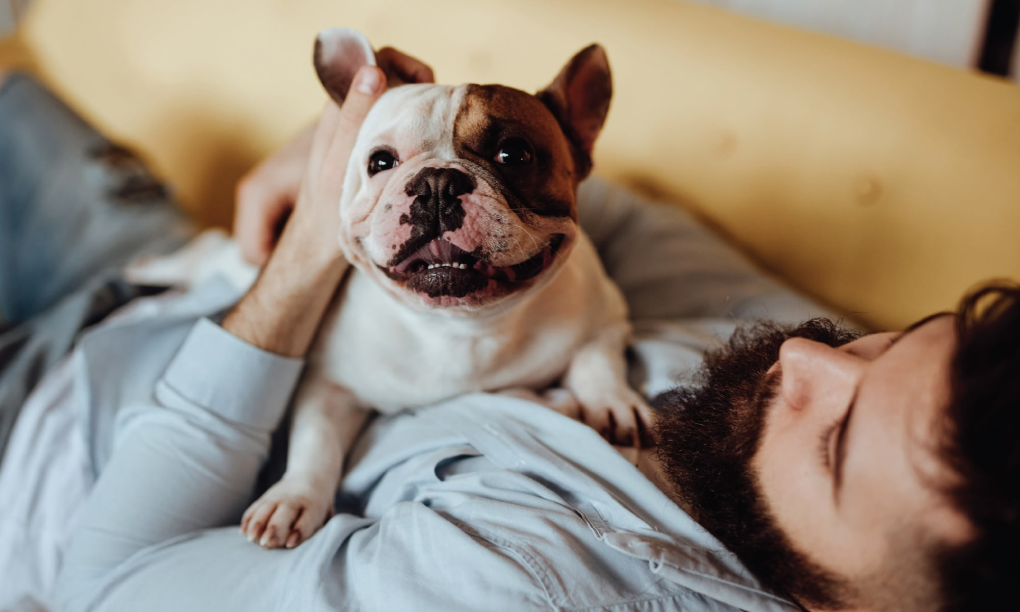 Pet friendly apartments at Zoey in Austin, Texas