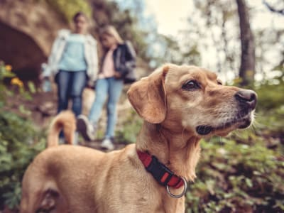Learn about our pet policy at Hawthorne Townhomes in South Salt Lake, Utah