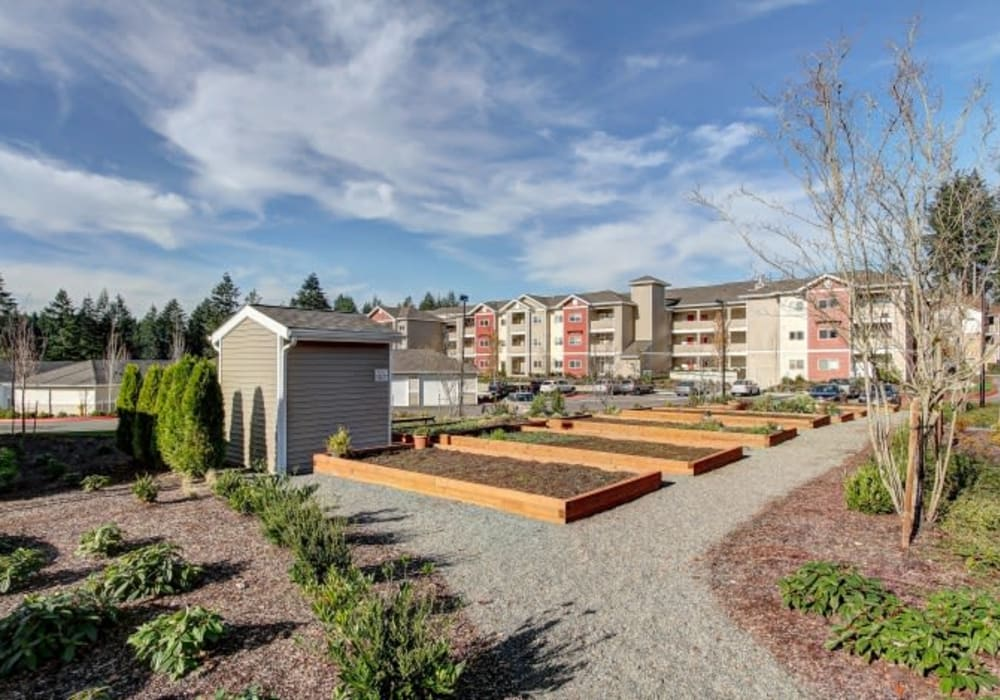 Large outdoor community garden at LARC at Olympia in Olympia, Washington