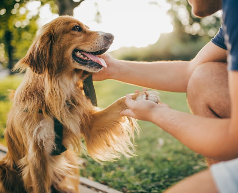 Dog enjoying a walk with its owner at Eastwood Village in Stockbridge, Georgia