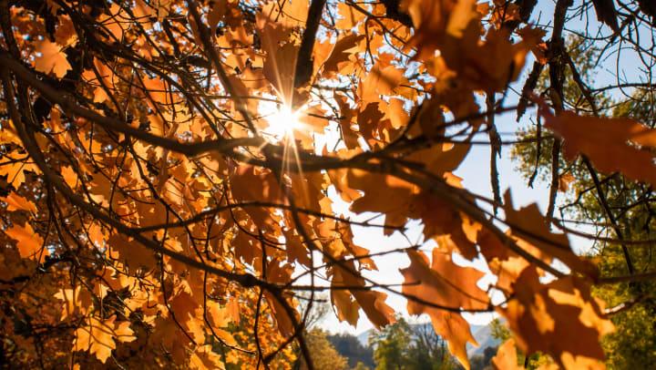 fall festivities near Velo