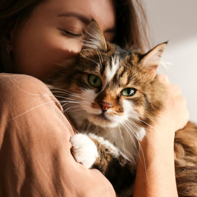 Link to our pet policy at Mediterranean Village Apartments in Costa Mesa, California