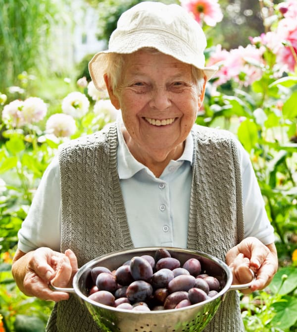 Lady with a strainer full of plums in the garden at The Phoenix at Greer in Greer, South Carolina