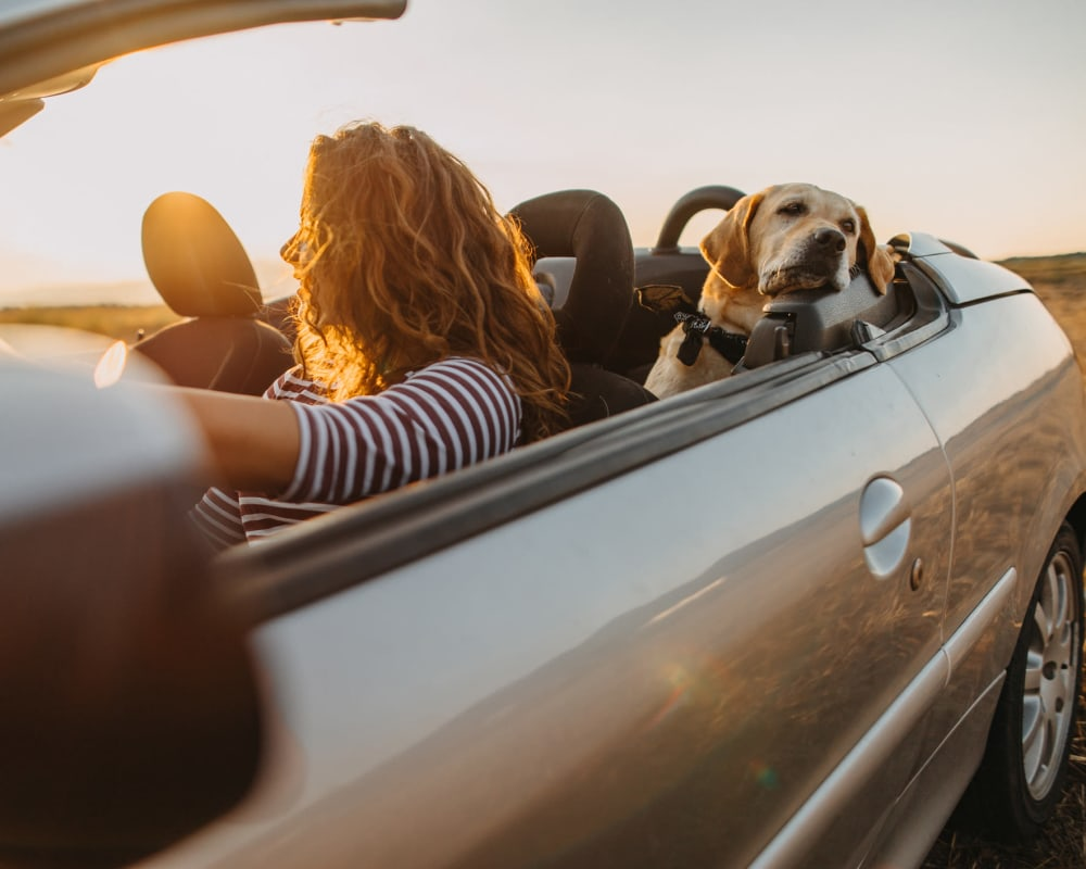 Resident and her dog going for a drive on a beautiful afternoon near Olympus Waterford in Keller, Texas
