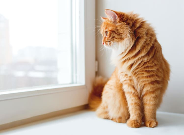 Cat looking out the window of her new home at The Landmark Apartment Homes in Sunnyvale, California