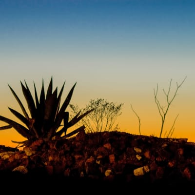 Sunset with cactus at RockBrook Memory Care in Lewisville, Texas