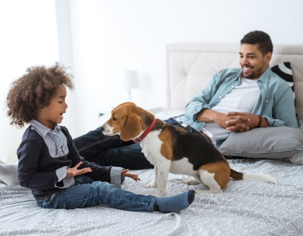 pet friendly apartments at The Residences at Brookside in Richmond, VA