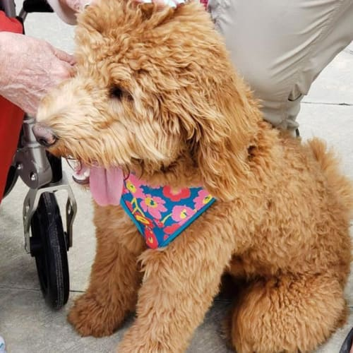 A resident's puppy at Oxford Glen Memory Care at Owasso in Owasso, Oklahoma