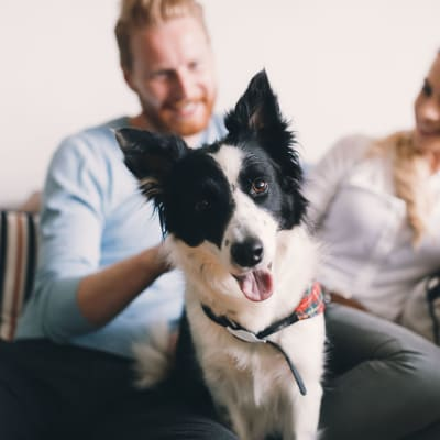 Link to our pet policy at Main Street Apartments in Rockville, Maryland