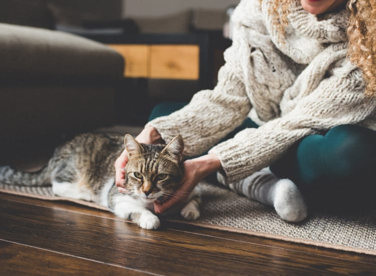 Resident petting her cat at Carriage House in Fremont, California