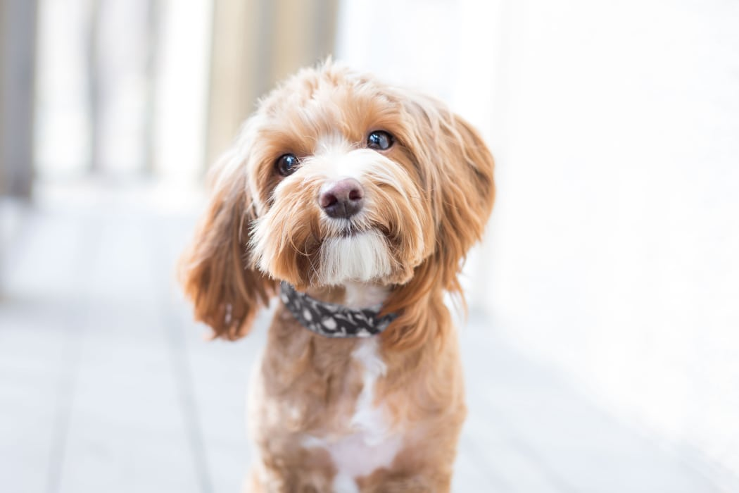 Happy dog enjoying its new community at IMT Sherman Circle in Van Nuys, California