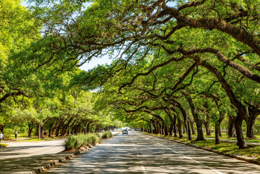 Tree-lined streets near The Village of Southampton in Houston, Texas