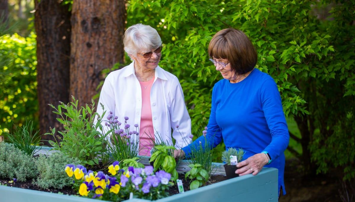 senior residents planting flowers