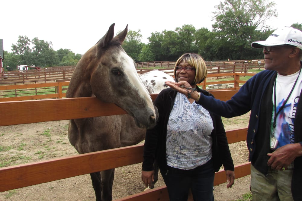 senior feeding a horse