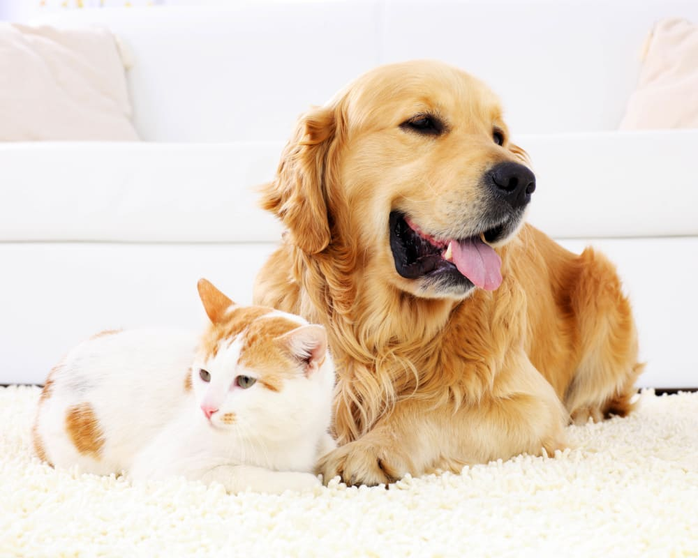 Resident and dog and cat relaxing together on a rug in their new apartment home at Olympus Grand Crossing in Katy, Texas